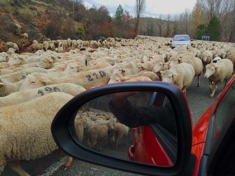 La Trashumancia en tierras de Cuenca