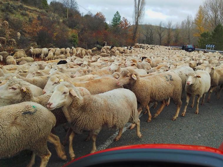 La Trashumancia en Cuenca