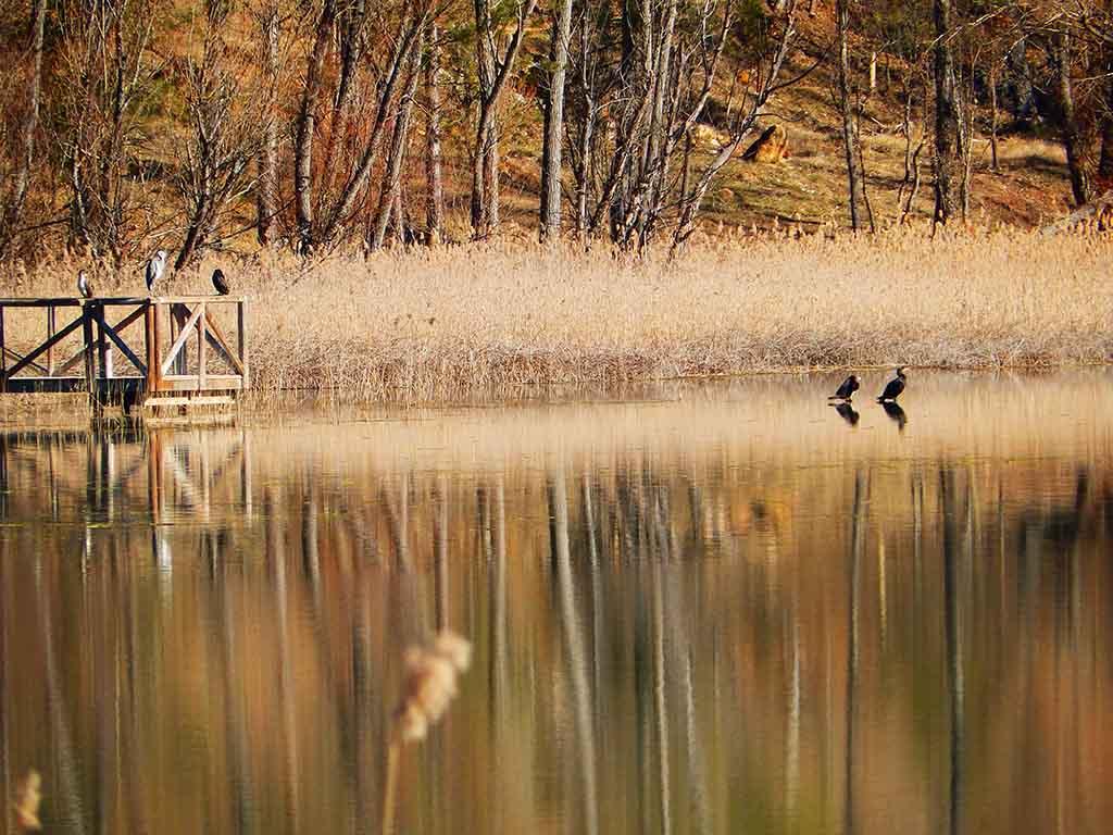 Laguna de Uña con cormoranes